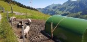 Wanderweekend_2020_Schwarzsee-24